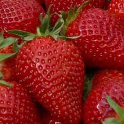 Aardbeien voor beginners