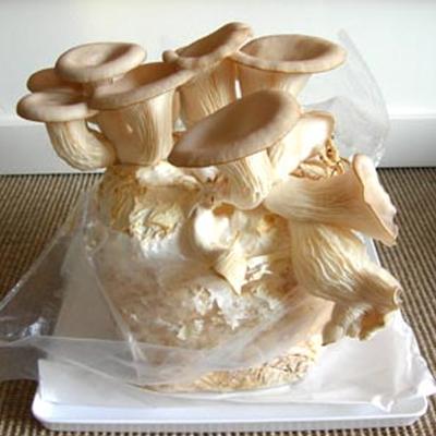 Doe-het-zelf paddenstoelen