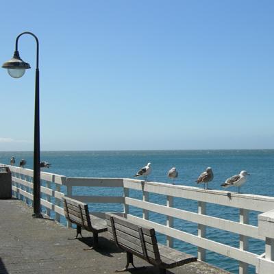 Krab eten op de pier
