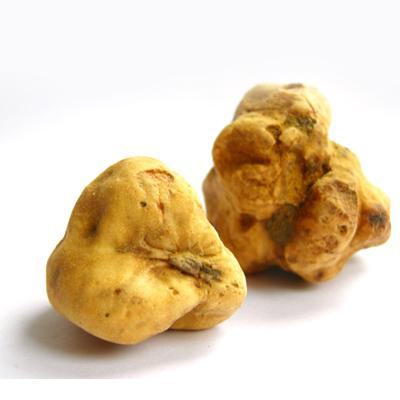 Witte truffel online