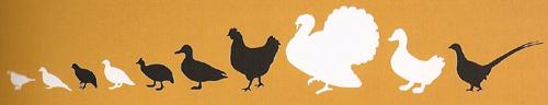 gevogelte-rijtje