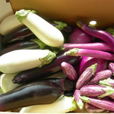 Ravioli met aubergine