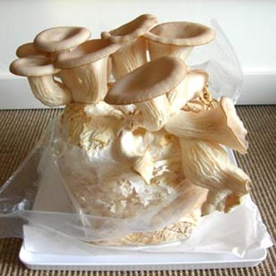 Zelf champignons kweken