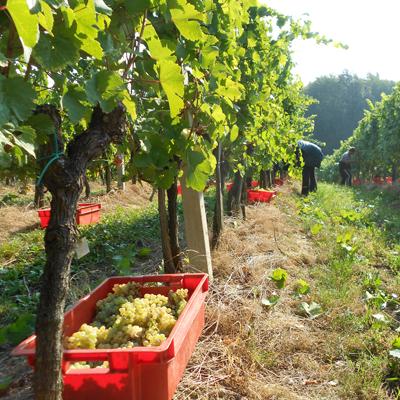 Wijnreis Slovenië
