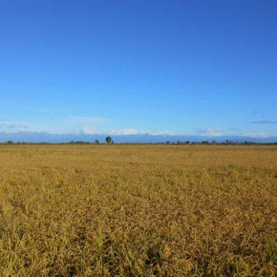 Alles over risottorijst (1)